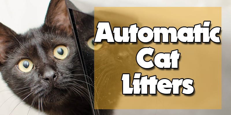 Top 6 Best Automatic Self-Cleaning Litter Boxes